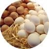 Eier vom Bauer Lass