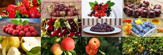 Erntezeiten auf dem Obsthof Gut Stubbe