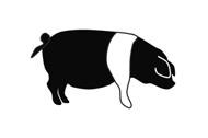 Angler Sattelschwein von Gut Stubbe