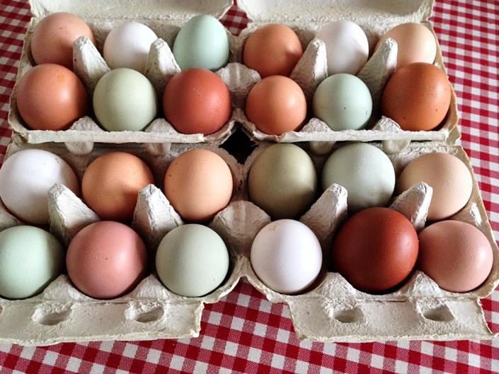 Eier von freilaufenden Hühnern von Gut Stubbe